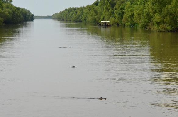 Alligatorer