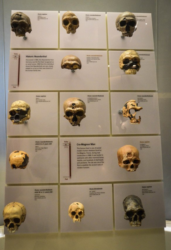 Natural History Museum-14