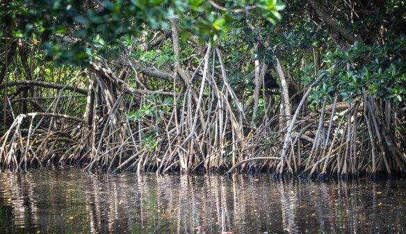 Everglades-10
