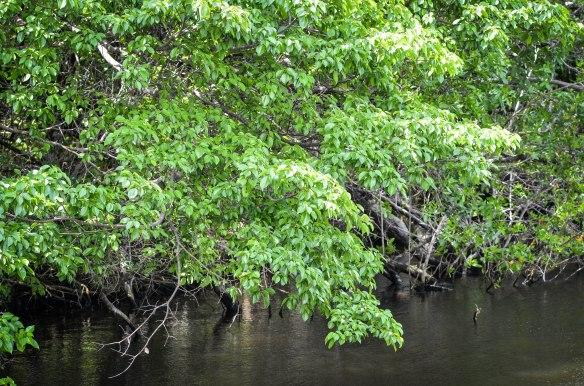 Everglades-12