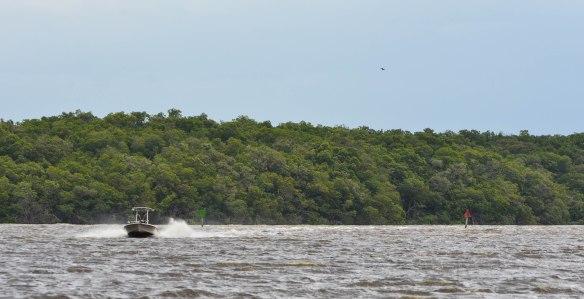 Everglades-15
