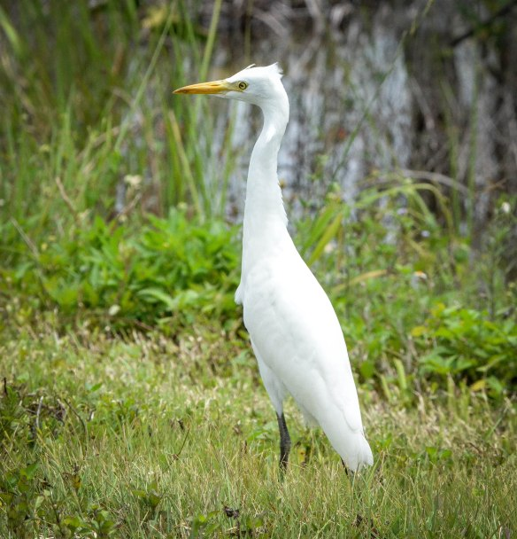 Everglades-6