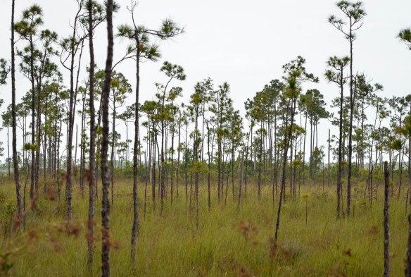Everglades-7