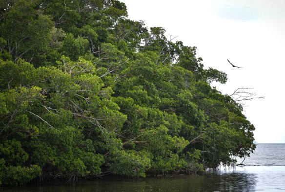 Everglades-8