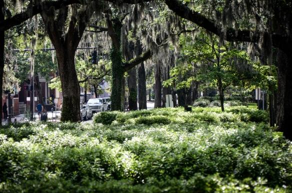 Savannah 2014-4